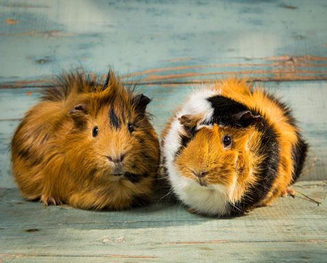 kaninchen futter im cooschel shop finden sie mehr als kaninchen futter. Black Bedroom Furniture Sets. Home Design Ideas