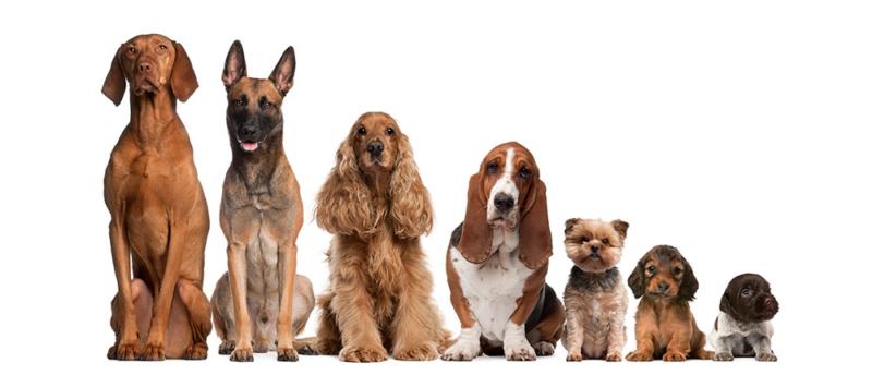 Tiernahrung von Cooschel, Hundefutter ohne Getreide