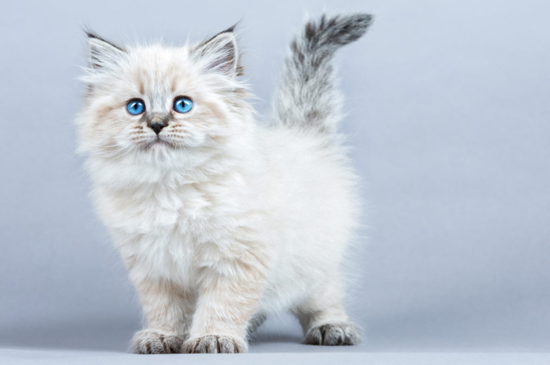 Tiernahrung für junge Katzen, von Cooschel