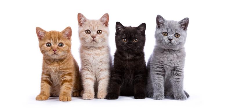 Katzenfutter ohne Getreide, von Cooschel