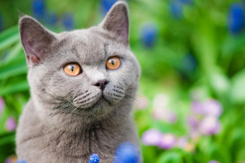 Tiernahrung für ausgewachsene Katzen