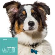 Hundefutter Angus Rind, für ausgewachsene Hunde