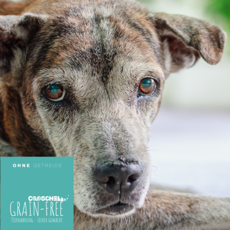 Hundefutter Forelle, getreidefrei, für ältere Hunde