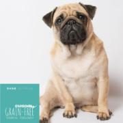 Hundefutter Forelle Light, getreidefrei, für mollige Hunde
