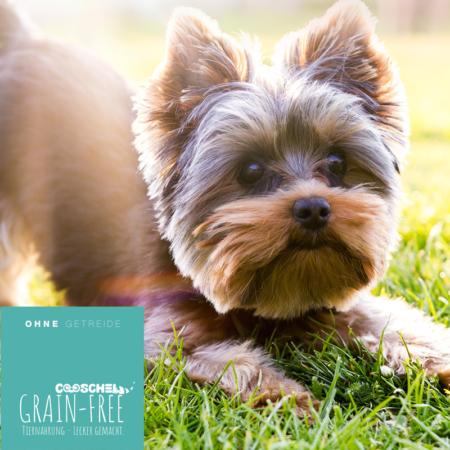 Hundefutter Huhn, getreidefrei, für ausgewachsene Hunde kleiner Hunderassen