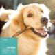 Hundefutter Lachs, getreidefrei, für ausgewachsene Hunde