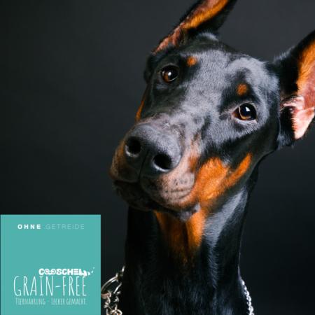 Hundefutter Lachs, getreidefrei, für ausgewachsene Hunde großer Hunderassen