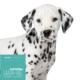 Hundefutter Lachs, getreidefrei für Welpen großer Hunderassen