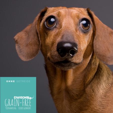 Hundefutter Lamm, getreidefrei, für ausgewachsene Hunde kleiner Hunderassen