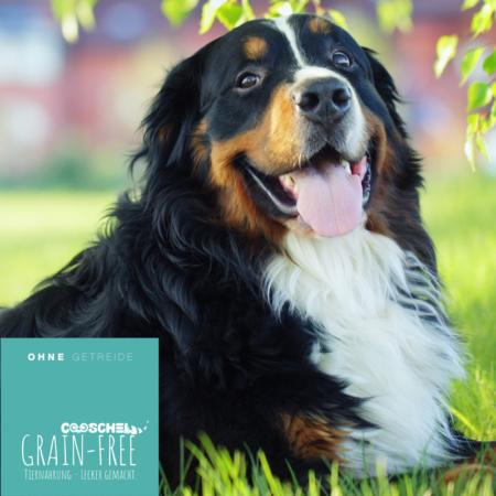 Hundefutter Lamm, getreidefrei, für erwachsene Hunde