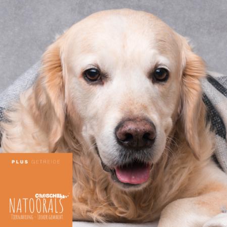 Hundefutter Naturals Truthahn, für ausgewachsene Hunde