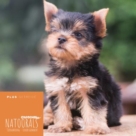 Hundefutter Naturals Truthahn, für kleine Hunde