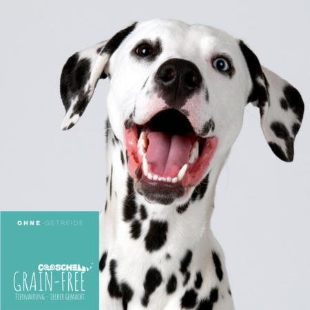 Hundefutter Schellfisch, getreidefrei, für ausgewachsene Hunde