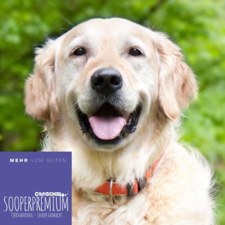Hundefutter Super Premium Forelle