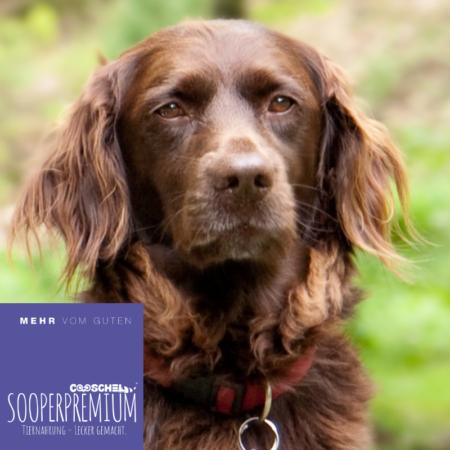 Hundefutter Premium für ausgewachsene Hunde