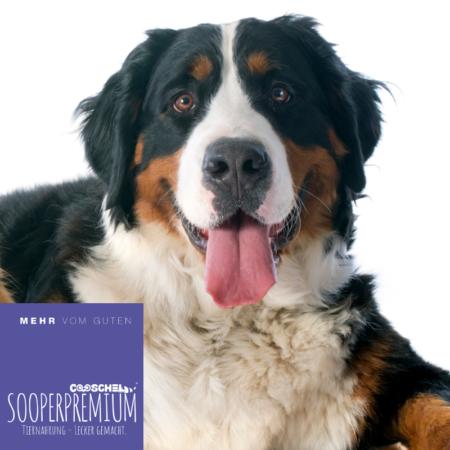 Hundefutter Super Premium Huhn, für ausgewachsene Hunde großer Hunderassen