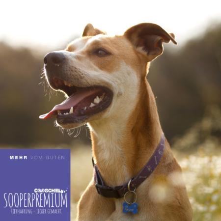 Hundefutter Premium Lachs für ausgewachsene Hunde