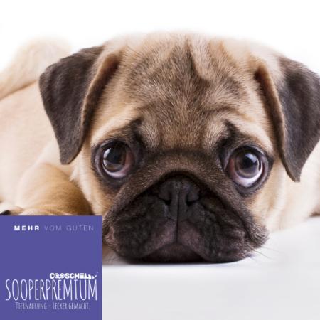 Hundefutter Super Premium Lachs