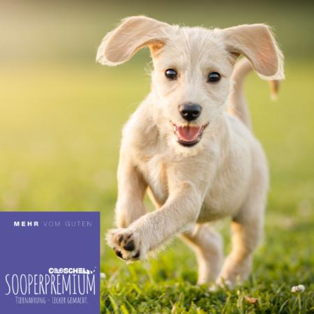 Hundefutter Super Premium Lachs für Welpen