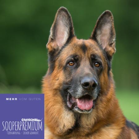 Hundefutter Super Premium Truthahn