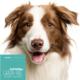 Hundefutter Thunfisch, getreidefrei, für ausgewachsene Hunde