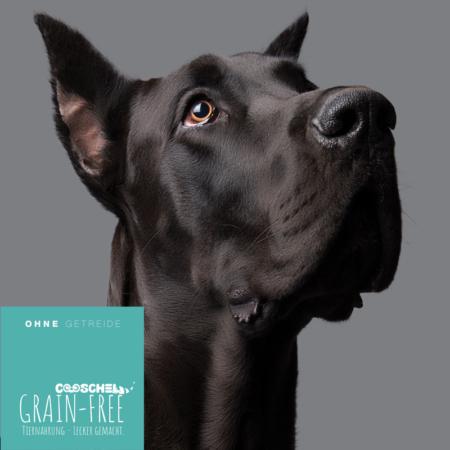 Hundefutter Truthahn, getreidefrei, für ausgewachsene große Hunderassen