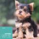 Hundefutter Truthahn, getreidefrei, für Welpen kleiner Hunderassen