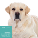 Hundefutter Truthahn Light, getreidefrei, für dicke Hunde