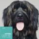 Hundefutter Wild, getreidefrei, für ausgewachsene Hunde