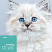Katzenfutter Huhn Lachs, getreidefrei, für Kitten