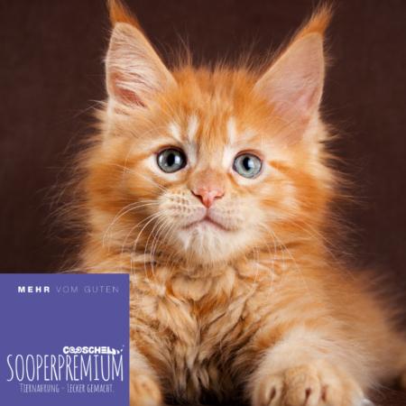 Katzenfutter Super Premium Lachs und Huhn, für erwachsene Katzen