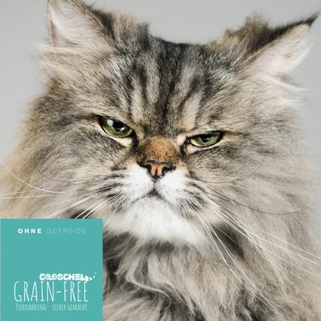 Katzenfutter Truthahn, getreidefrei, für erwachsene Katzen
