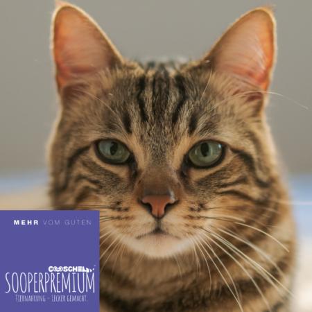 Katzenfutter Katzenringe von Cooschel